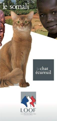 chat lievin